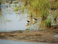 Los humedales de los terrenos bajos, son ocupados por plantas flotantes y en sus orillas abundan pastos acuáticos. Este es el hábitat de cai...