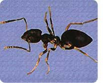 Ant questions?  Check out our insect guide for answers!   #TerroDeadAnts