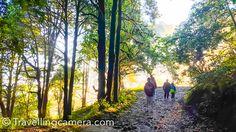 Early morning walk around Zero-point in Binsar Wildlife Sanctuary || Uttrakhand Diaries