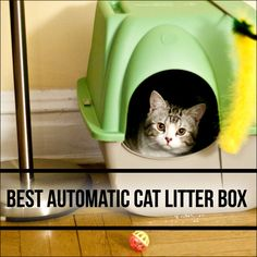 To learn more about how an automatic cat litter box works vising http://www.petsho.com/best-automatic-cat-litter-box/ , a popular website devoted to cat lovers everywhere. You'll find lots of information on the different types of boxes and cat litter now available, including pine, flushable, silica and clumping litter.