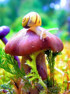 mushroom and snail ... rich in color and texture