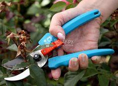 Как правильно обрезать розы после цветения. Основные правила обрезки роз штамбовых, флорибунда, крупноцветковых, обрезка плетистой розы после цветения