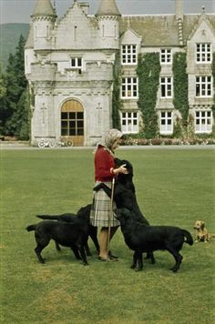 "Queen Elizabeth at Balmoral with her Black Labs (and a Dorgi in the background).  To them, she's just ""Mum."""