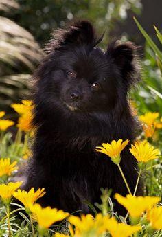 Diamond Dogs, Monkey, Teddy Bear, Animals, Animales, Playsuit, Animaux, Monkeys, Teddybear