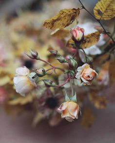 Find images and videos about flowers, rose and garden on We Heart It - the app to get lost in what you love. Rosa Rose, Images And Words, Autumn Garden, Potpourri, Beauty And The Beast, Flower Power, Planting Flowers, Beautiful Flowers, Romantic Flowers