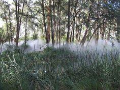 """Fog Sculpture #94925 """"Foggy Wake in a Desert: An Ecosphere,"""" Sculpture Garden, Australian National Gallery, Canberra"""