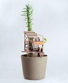 Mini casas na árvore em cactos e suculentas. Criado por Jedediah Corwyn;