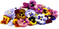 Pansy Flowers Information, Recipes and Facts