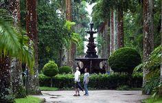 Botanical Garden, Rio de Janeiro - 9reasons to visit Rio de Janeiro http://cristinaraducu.com/2015/04/14/9-reasons-for-loving-rio/#more-145