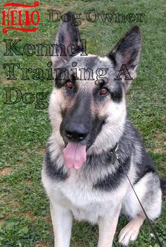 Kennel training is useful with youthful dogs and also older puppies with stress and anxiety issues. The greatest goal regarding crate exercising is trying to keep your dog away from harms approach. Kennel Training A Dog, Crate Training, Dog Training Tips, Stress And Anxiety, Have Fun, Puppies, Dogs, Advice, Animals