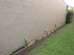 I have decided to put a Star Jasmine over our neighbours garage wall. I have decided to Vine Trellis, Garden Trellis, Garden Wall Designs, Garden Design, Backyard Fences, Backyard Landscaping, Yard Fencing, Grafton House, Wall Climbing Plants