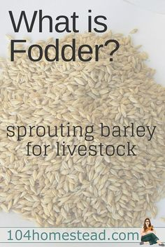 Homesteading News: Sprouting fodder is something farmers have been done for generations. Let's chat about sprouted barley because it's a great all-around grain for livestock.