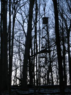 Fire Tower in the woods at Martin State Forest - Martin County, Indiana Martin County, Indiana State, State Forest, My Childhood Memories, Hiking Trails, Lonely, Wander, Woodland, Woods