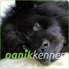 Es zahlt sich aus diesen Kurzfilm anzuschauen. Dogs, Animals, Black Dogs, Animales, Animaux, Pet Dogs, Doggies, Animal, Animais