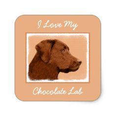 #Labrador Retriever (Chocolate) Square Sticker - #labrador #retriever #puppy #labradors #dog #dogs #pet #pets