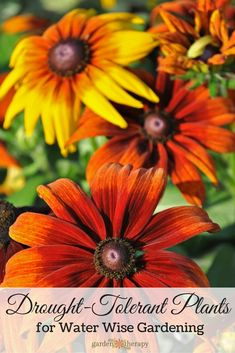 Drought tolerant plants to conserve water and provide an essential food source for pollinators