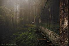 forest bridge in Alishan, Taiwan  photo by Kent