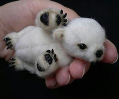 Polar bear newborn