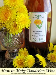 """Dandelion Wine Recipe -  """"In the late 1800s and early 1900s, it was not proper for ladies to drink alcohol; however, dandelion flower wine w... Dandelion Wine, Dandelion Flower, Homemade Wine Recipes, Smoothies, Dandelion Recipes, Wild Edibles, Wine And Beer, Edible Flowers, Back To Nature"""