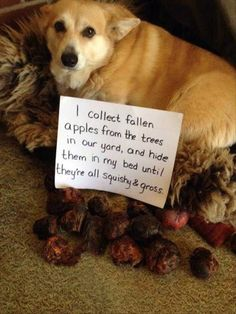 17 Funny Animal Picture Dump #puppyshaming