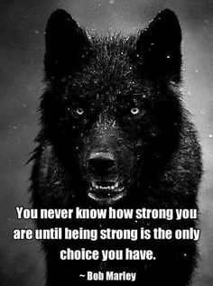 38 best images about wolf quotes on Pinterest