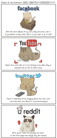 De katten van het web presenteren: social media