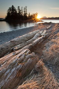 Driftwood along the shore at the Halibut Point Recreation Area in Sitka, Alaska.