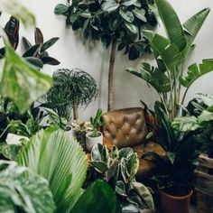 Indoor Jungle Inspirations_07