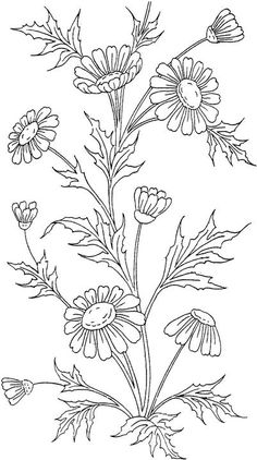 Just Coloring Pages: Free flower coloring pages for adults Printable coloring sheets - Flower Coloring Pages, Coloring Book Pages, Printable Coloring Pages, Coloring Sheets, Kids Coloring, Embroidery Stitches, Embroidery Designs, Hand Embroidery Patterns Free, Embroidery Tattoo