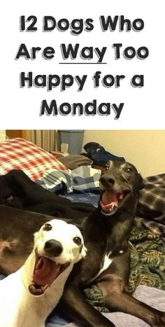 The 3rd pic down... 99.9% of people can't look at it without smiling!! http://theilovedogssite.com/12-dogs-who-are-way-too-happy-for-a-monday/