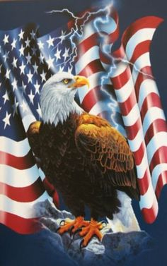 Image result for Most beautiful Bald Eagle and flag