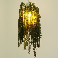 Julia Lohmann stretches and varnishes kelp to make unusual lampshades. I love this.