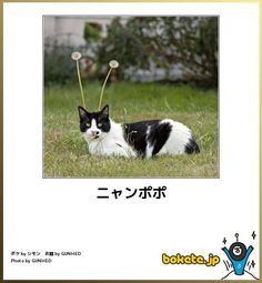 ニャンポポ Animals And Pets, Funny Animals, Cute Animals, Funny Cute Cats, Cool Cats, Crazy Cat Lady, Crazy Cats, Kawaii Cat, Make You Smile