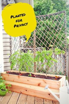 Need privacy in your yard. Build a container, add a trellis and a climbing flowering vine like Wisteria!  See how it's done http://justdecorate.wordpress.com