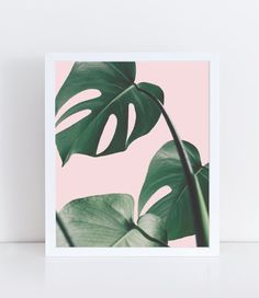 Monstera Print Plants on Pink Botanical Decor Living Room