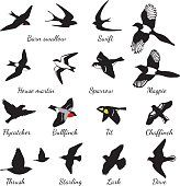 22 Ideas Simple Small Bird Tattoo Ribs For 2019 Barn Swallow Tattoo, Swallow Bird Tattoos, Tiny Bird Tattoos, Small Tattoos, Tattoos For Guys, Bird Tattoo Ribs, Simple Bird Tattoo, Bird Tattoo Back, Black Bird Tattoo