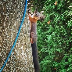 Herbstlicher Besuch #Eichhoernchen #Herbst #squirrel #autumn Instagram, Autumn