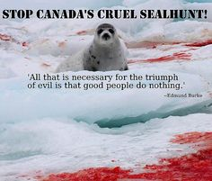 HELD END Canada's Seal Hunt! People around the world continue to say no to seal products, but the Canadian government stubbornly continues to try to sell these cruel products. It is fighting the EU ban at the WTO & trying to overturn the ban in Russia. THE BAN MUST BE DEFENDED! PLZ SIgn & Share!