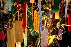 Kyoto. On Tanabata, the Japanese star festival (around July 7), people write their wishes on on strips of tanzaku which they hang on a special bamboo tree to pray for good relationships and romantic encounters.