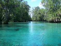 Three Sisters Springs Florida | Three Sisters Springs (Citrus County, FL)