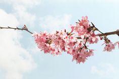 CingJing Green Green Grassland, 青青草原步道, Ren'ai Township, Taiwan Cherry Blossoms, Solo Travel, Farm Animals, Taiwan, Acre, Lush, Clouds, Green, Flowers