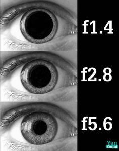This is a little over the top, but the combination of settings really does work in the same way :) Your pupils open wide to let in more light in darkness, close down to let in less in bright light/sun.