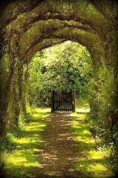 """Tree tunnel gate, Wales """