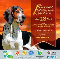 Bloodhound, Exhibitions, Animales