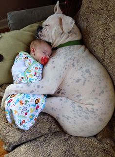 Things that make you go AWW! Like puppies, bunnies, babies, and so on. A place for really cute pictures and videos! Animals For Kids, Animals And Pets, Baby Animals, Funny Animals, Cute Animals, Cute Puppies, Dogs And Puppies, Doggies, Boxer And Baby