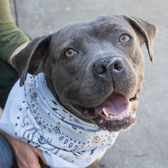Update May 2015: Hi, I'm Hannah, I'm smiling because I'm ADOPTED!! My forever family found me, and I'm enjoying getting belly rubs and giving them kisses. I was a longest term resident at Oakland Animal Services. If you're planning on adopting, please visit one of the longest term dogs at the shelter, and prepare to fall in love!