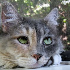 magical-meow:Contemplation ~ ~ ~ (by Trish Hamme)