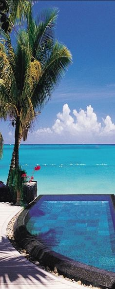 Royal Palm, Mauritius, Indian Ocean -- by idee per viaggiare