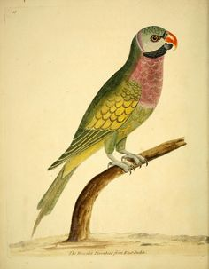 v. 2 - A natural history of birds : - Biodiversity Heritage Library