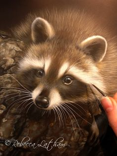5 Reasons Why I Love Working With Watercolor - Paintings of Wildlife & Nature by Rebecca Latham Wildlife Paintings, Animal Paintings, Animal Drawings, Raccoon Drawing, Raccoon Art, Watercolor Animals, Watercolor Paintings, Watercolors, Wild Creatures